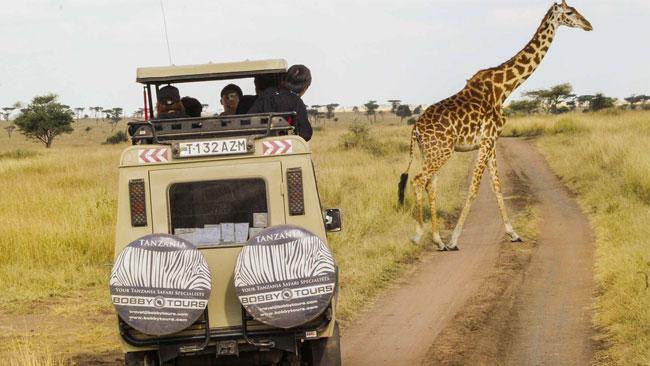 Safari-en-Tanzanie