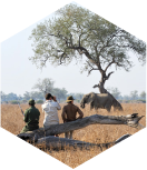 Safaris-à-pied