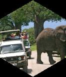 Safaris-motorisés