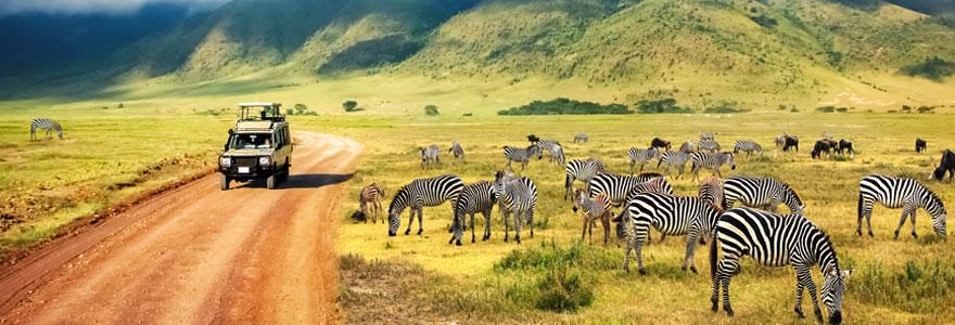 Réserver un safari sur mesure