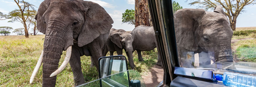 Safari au serengeti